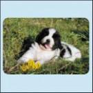 Novofundlandský pes, štěně