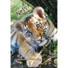 Nely, tygří princezna