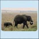 Afričtí sloni - Tanzánie - magnetka na ledničku nebo skříňku