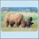 Medvědi kodjak -  Aljaška
